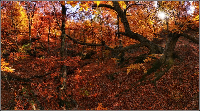 крым, демирджи, осень, буковый лес, панорама *  *  *photo preview