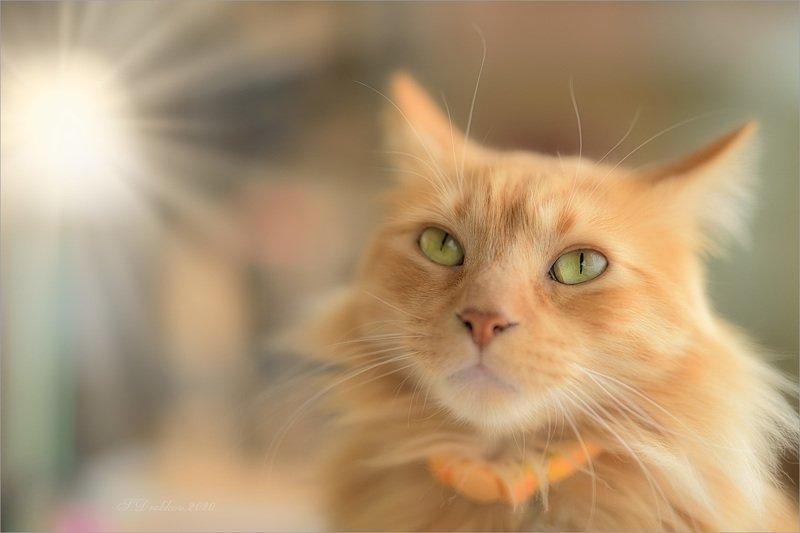 кошки, животные, портрет Lightphoto preview