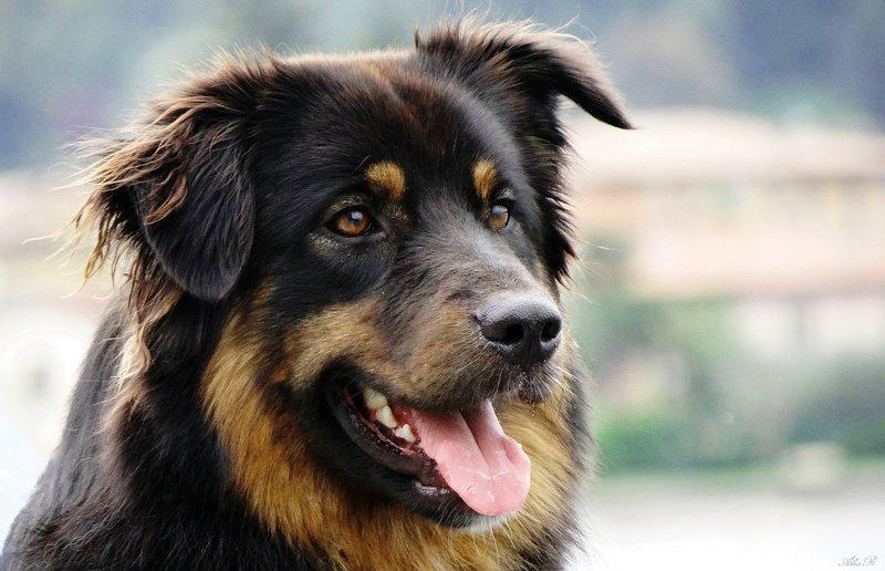 Добрый бездомный пес...photo preview