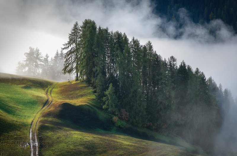 Италия, Альпы Опушкаphoto preview