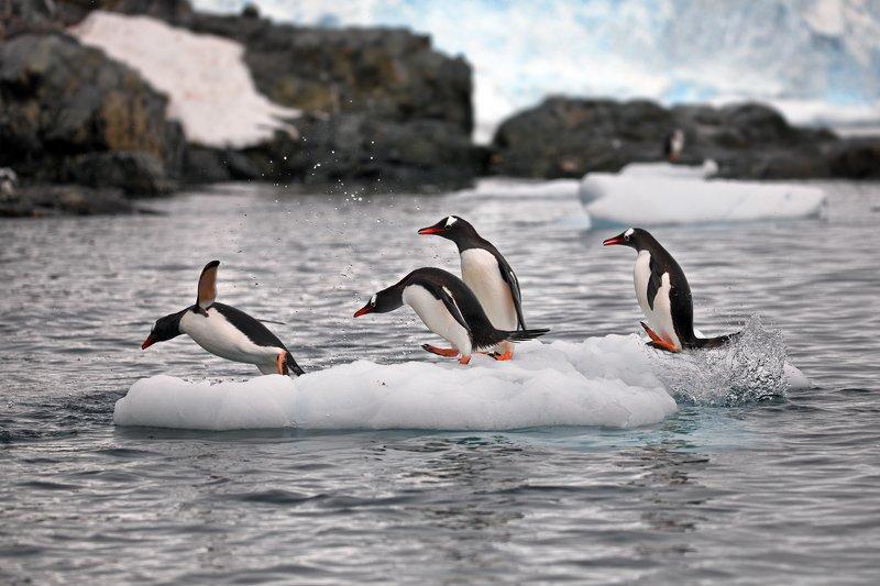 Пингвиньи истории - 3photo preview