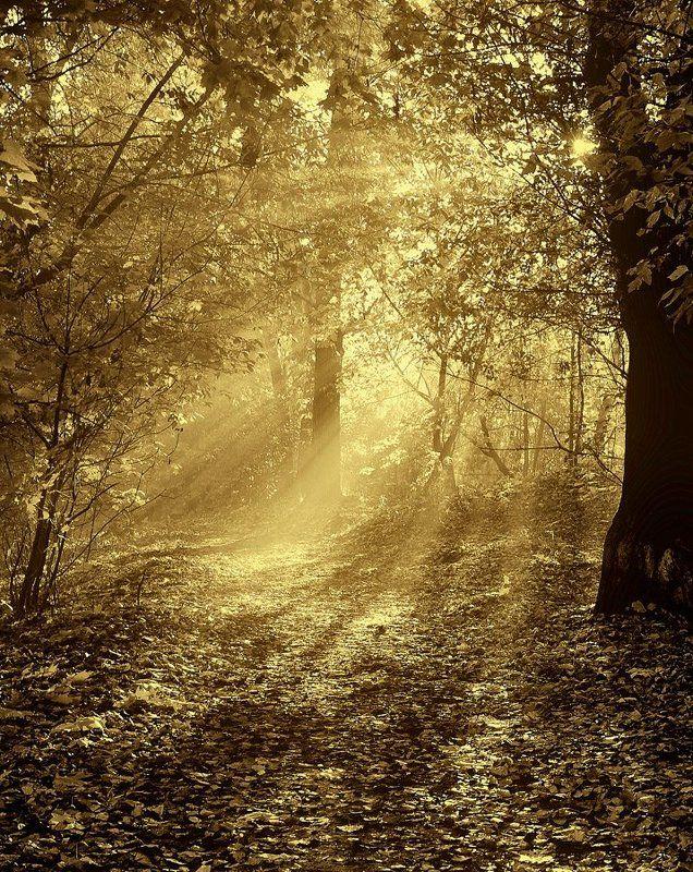 про желтые листьяphoto preview