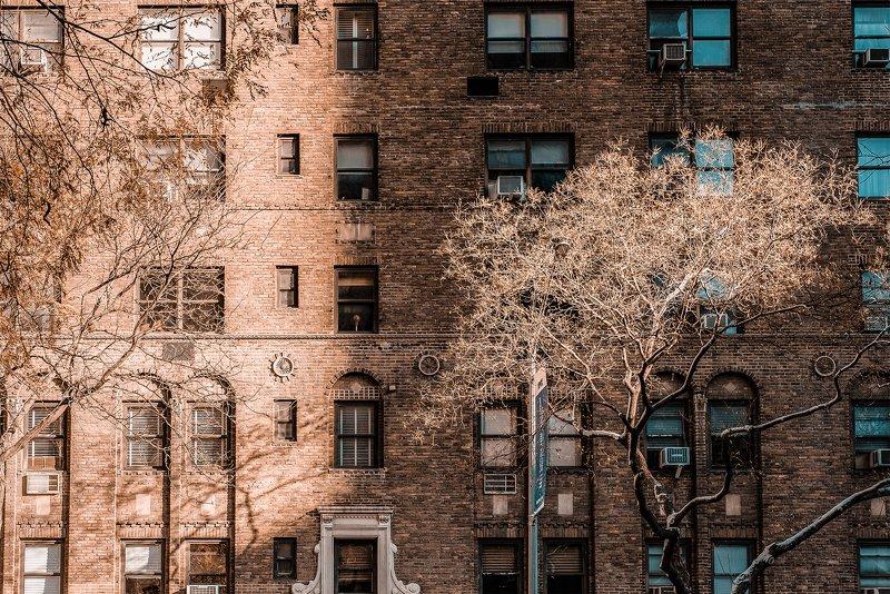 контраст абстрактно светотень стена дерево город архитектура нью-йорк Свет и тень на Мэдисон-авенюphoto preview