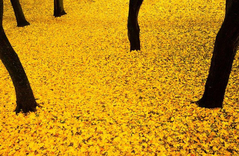 impression, autumn, color Impressionphoto preview