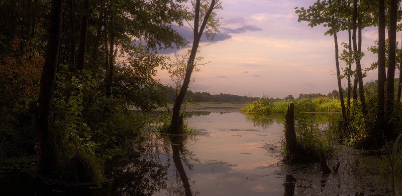 лето, июнь, река Клева, зелень, отражение, облака В тени летаphoto preview