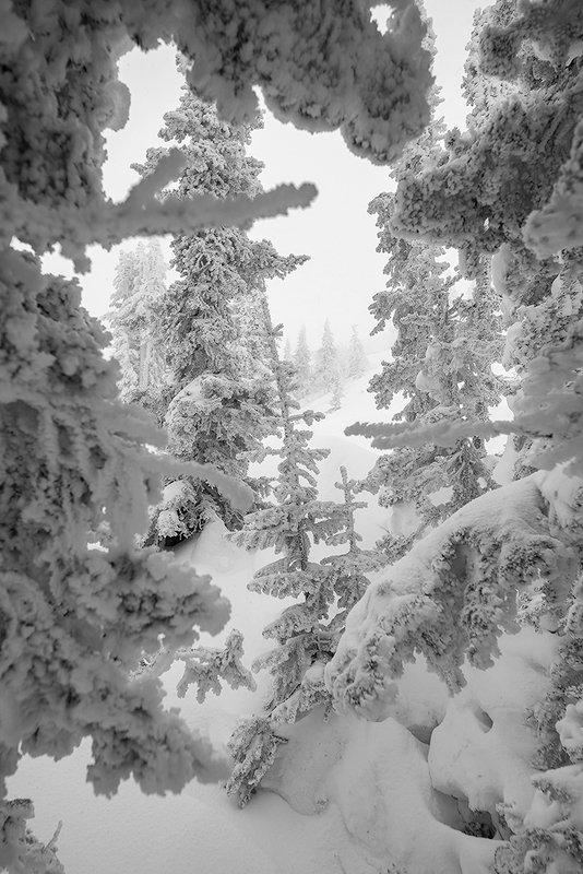 зима, иней, снежные узоры, мороз, пихты, рябины, кедры, берёзы, гора зелёная, зима, шерегеш, горная шория, сибирь Pro зимние вертикали Шерегешаphoto preview