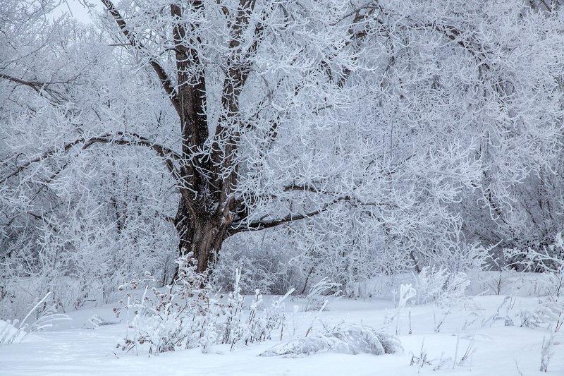 пейзаж,зима,дерево,иней снег,сугроб Зимний день 4photo preview