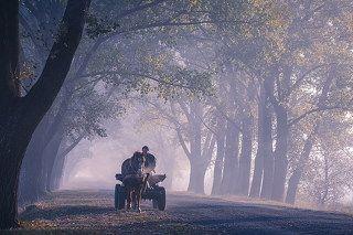 Пронзая утренний туман...