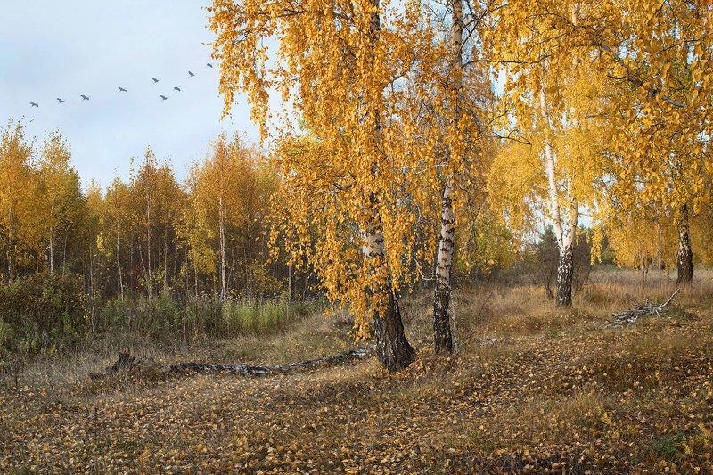 пейзаж, осень, зауралье, лес, журавли Зауральская осеньphoto preview