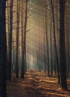 Тих и таинственен лес