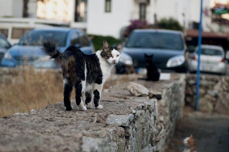 кошки, жанр, улица ***photo preview