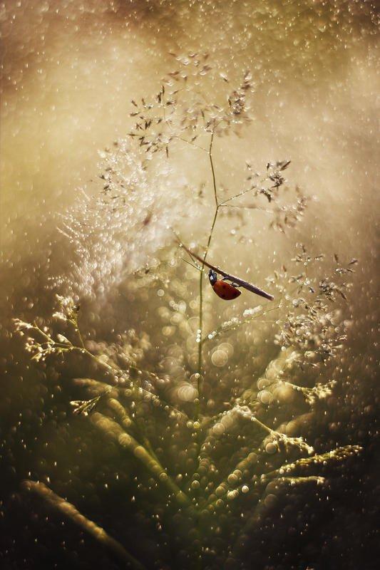 ladybug,macrofun,insect On the umbrellaphoto preview