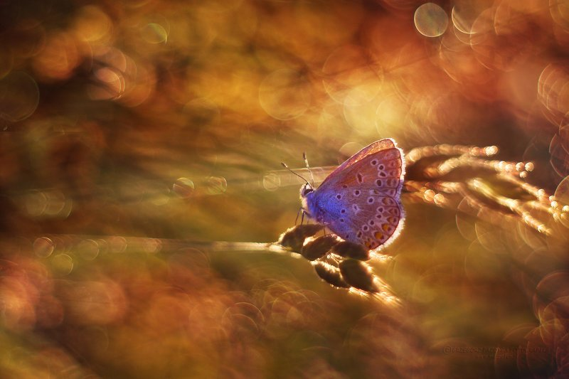 macrofun,insect,butterfly,summer,bokeh One day in summer...photo preview