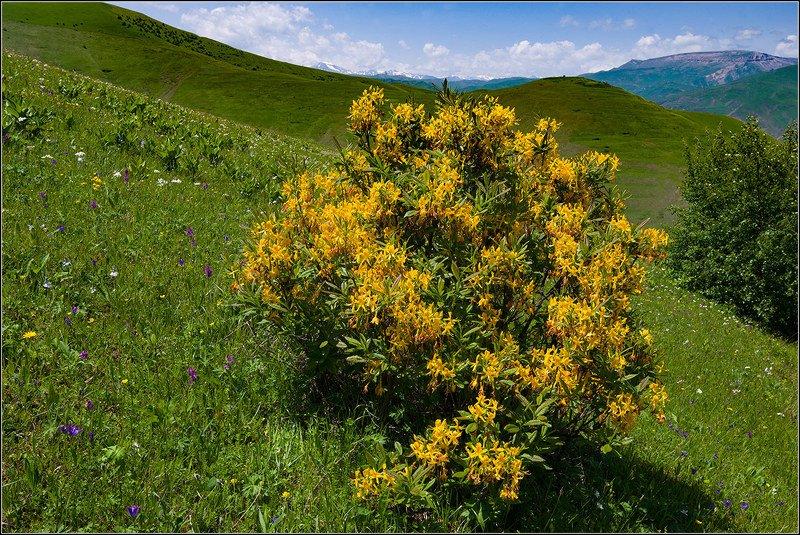 дагестан На альпийских лугах Кавказаphoto preview