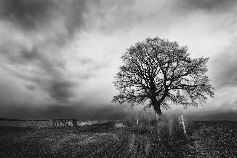 black and white, storm, tree, field, landscapes Before stormphoto preview