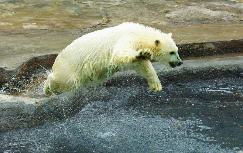 Медведь-летяга...:-)photo preview