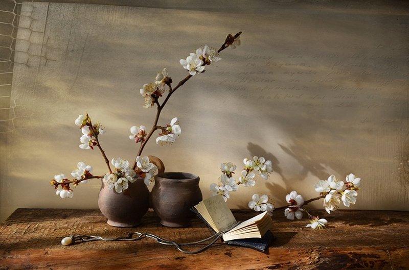 Весна ветви абрикоса натюрморт история  Тепло полустертых строкphoto preview