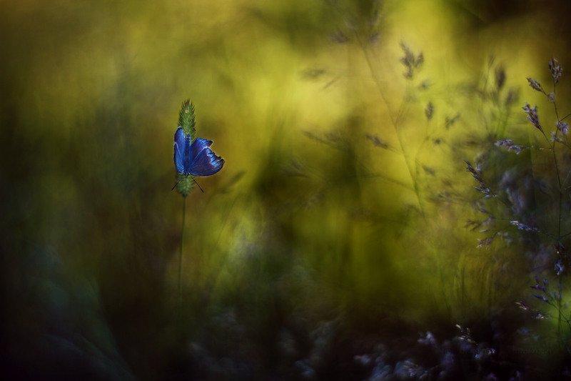 macrofun,butterfly,meadow,green,sun When the sun went downphoto preview