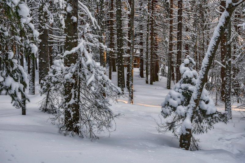 зима, лес, снег, иней, мороз, солнце, деревья, сугробы, елки, сосны, избушка Блеснуло солнце последним лучомphoto preview