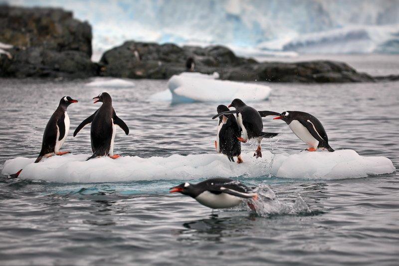 Пингвиньи истории - 5photo preview
