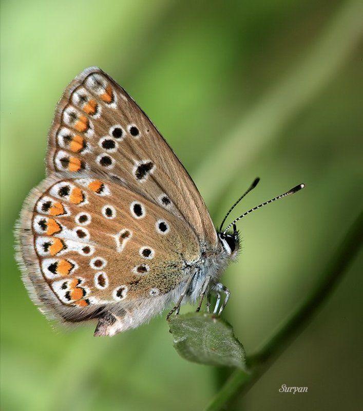 лето, трава, бабочка Цветочный сонphoto preview