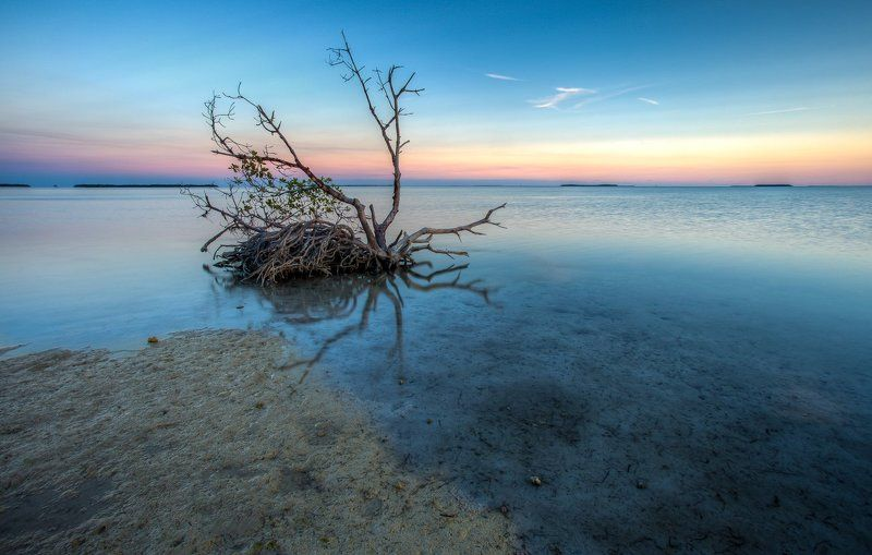 Mangrove lonelinessphoto preview