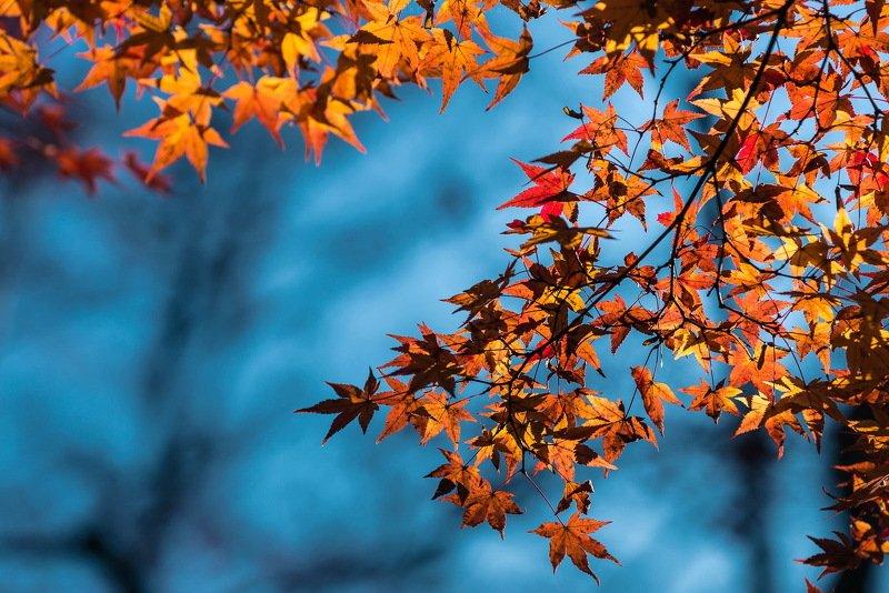 Опять про Осень...photo preview