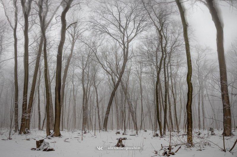 winter snow landscape panorama tree fog mist February mistphoto preview