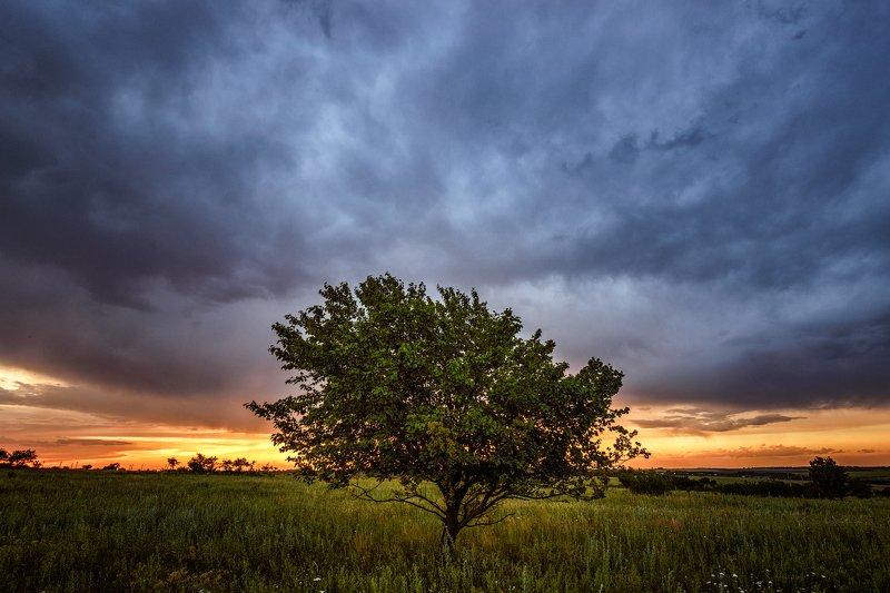 дерево, вечер, тучи, облака, природа, пейзаж, лето, закат Вечер перед дождёмphoto preview