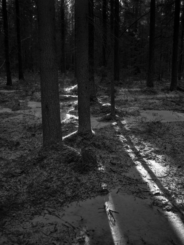 лес, зима, солнце, деревья 9.photo preview