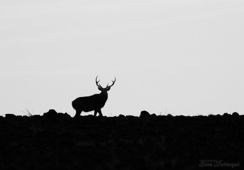 россия,парк,олени,животные,природа,wwf, фототур, анималистика,олень Вожакphoto preview