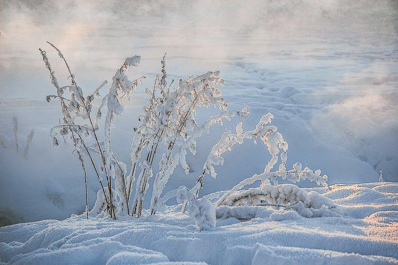 травинки, снег Фрагменты зимы.photo preview