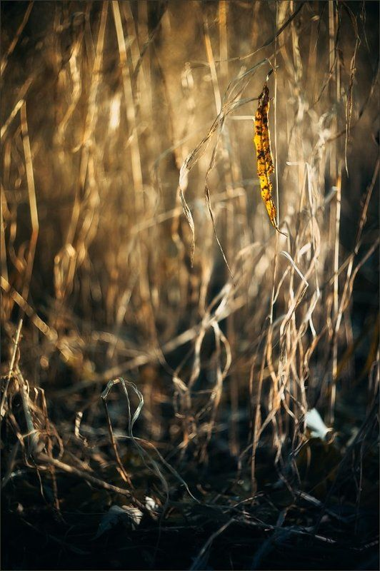 Осенняя историяphoto preview
