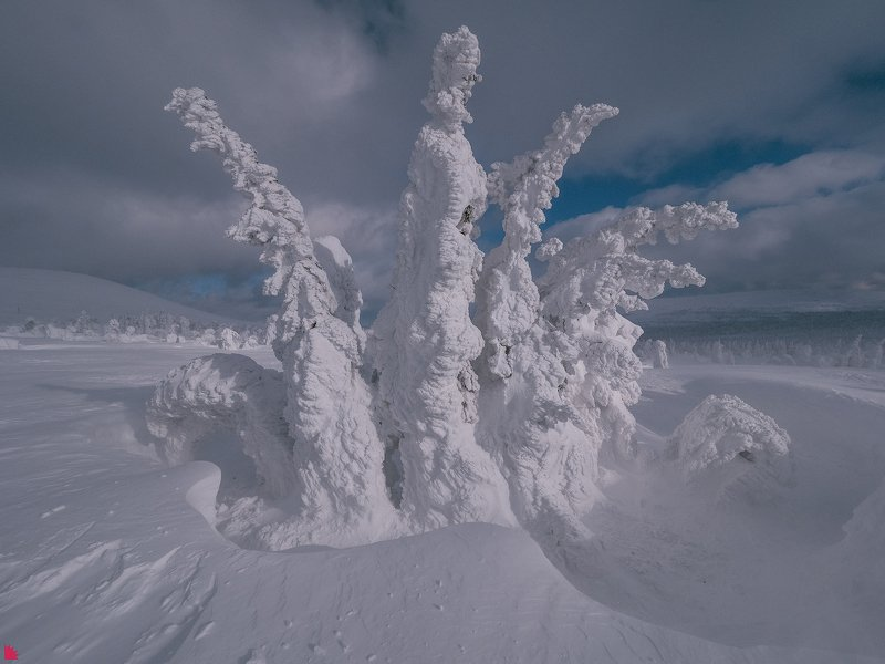 Снежная коронаphoto preview