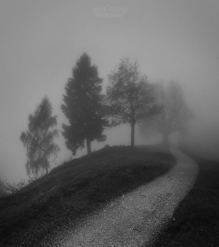 mist, fog, туман, дерево Path to the mistphoto preview