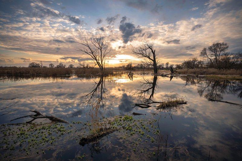 ранняя весна water sun national unteres odertal odra river dranikowski trees sky clouds Nationalpark Unteres Odertalphoto preview