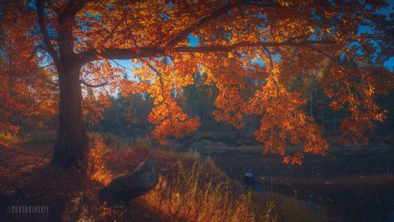 осень, река, бужа, владимирская область, рыбак, рассвет Про рыбалку)photo preview