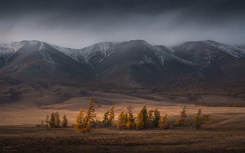 алтай, осень, курай, курайский хребет, курайская степь, лиственницы Кочевникиphoto preview
