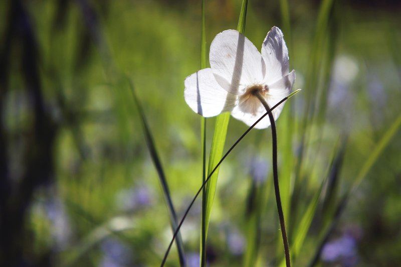 природа лето цветы цветок трава тень флора красота ***photo preview