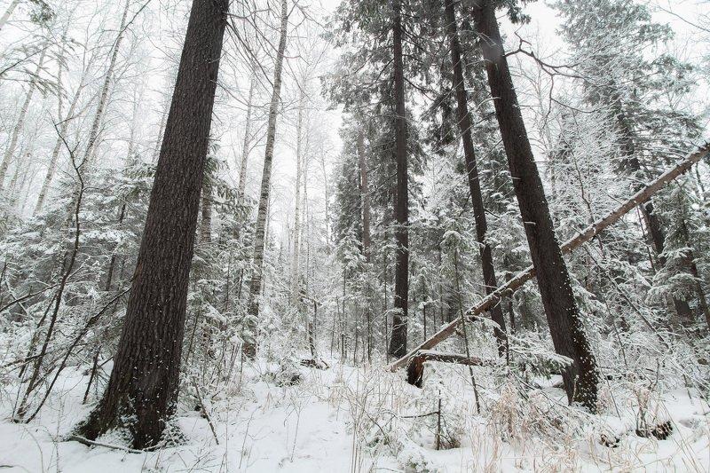 После снегопадаphoto preview