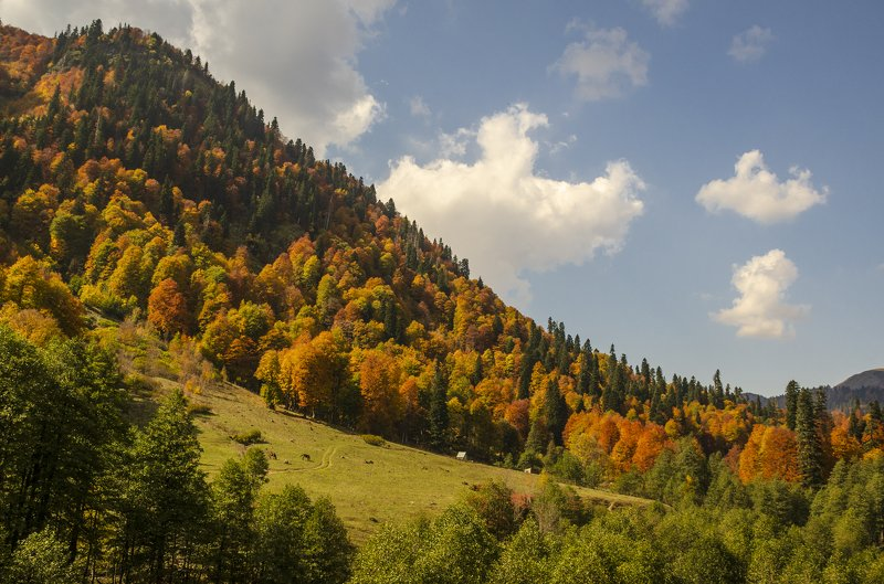 nevant60, пейзаж, красота, природа Осень на альпийских лугах Абхазииphoto preview