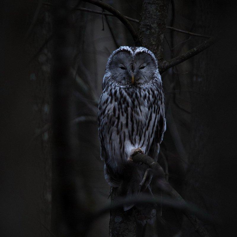 В темно-синем лесу, где трепещут осины.photo preview