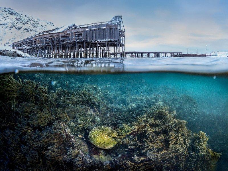 зима,север,териберка,подводный,сплит,под водой,природа,фототур,россия,пейзаж Сокровищеphoto preview