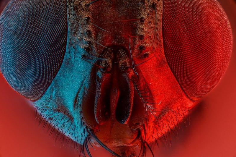 муха насекомое подсветка photo preview