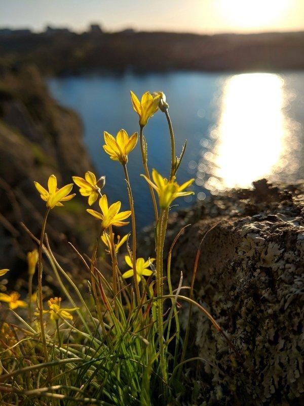 весна,цветы,зелень,солнце,пейзаж,вид,краски,цветение,март,природа,пробуждение,фотография,pictures,flouwers,первоцвет День весеннего равноденствияphoto preview