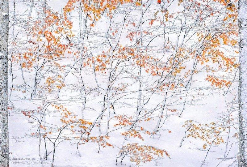 зима,осень,снег,пейзаж,крым,айпетри,природа,фототур Встреча осени и зимыphoto preview