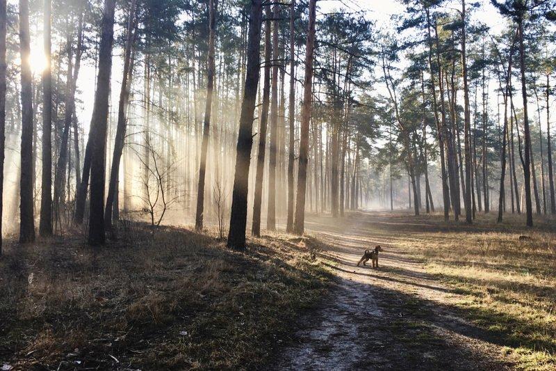 природа, лес, утро, пейзаж, рассвет * * *photo preview