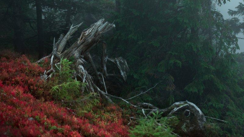 пейзаж Сказочный лесphoto preview