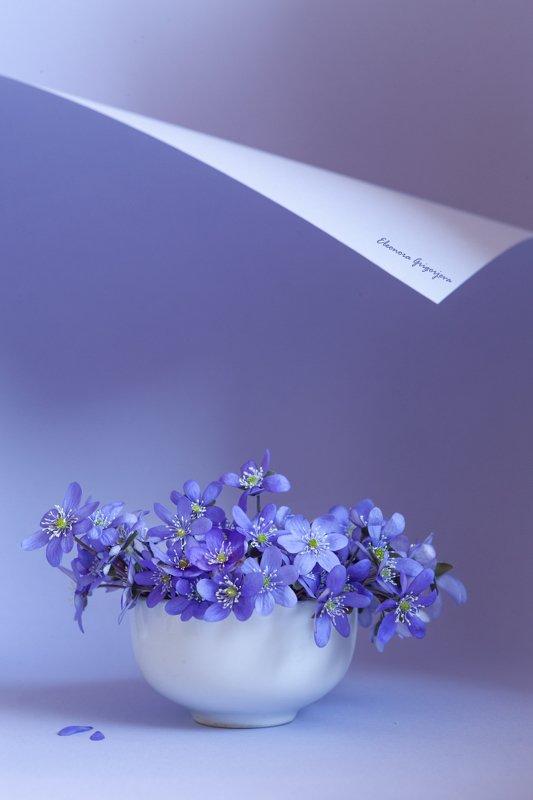 Весна в голубомphoto preview