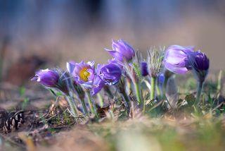 Акварельная весна